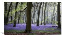 Morning Bluebell Woods, Canvas Print