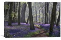 Bluebell Woodland Path, Canvas Print