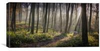 Woodland Morning, Canvas Print