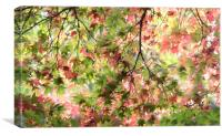 Glorious Autumn , Canvas Print