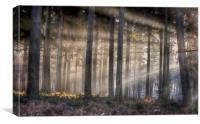 Morning Pine Woodlands, Canvas Print