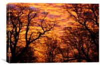Morning Sky, Canvas Print