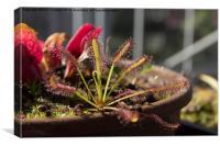 carnivorous plant, Canvas Print