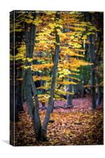 Autumn Leaves, Canvas Print