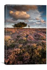 Heathland, Canvas Print