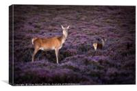 Deer on Dunwich Heath, Canvas Print