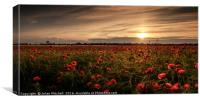 Poppy field at sunset, Canvas Print