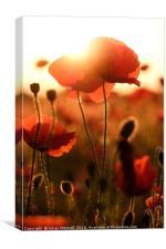 Poppies , Canvas Print