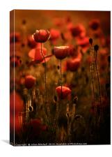 The Poppy Lamp, Canvas Print