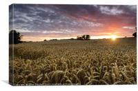 Sunset over the crop, Canvas Print