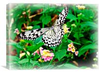 The Common Mime Butterfly on flowers, Canvas Print