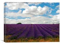 Lavender Landscape (Version 2), Canvas Print