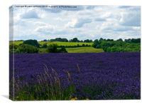 Cotswold Lavender & Landscape , Canvas Print