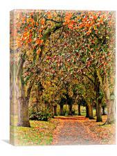 Autumn Avenue, Canvas Print