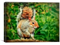 Cheeky Grey Squirrel , Canvas Print