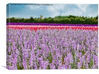 The Confetti Fields of England. , Canvas Print