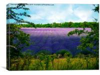 Summertime Lavender, Canvas Print