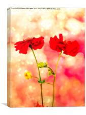 Scarlet Red., Canvas Print