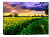Rapeseed Sunset, Canvas Print