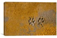 Paw Prints, Canvas Print