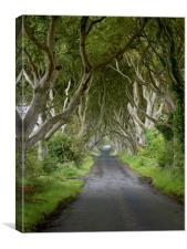 The Dark Hedges. Stranocum, Canvas Print