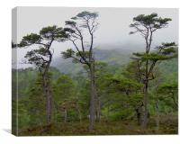 River Affric, Highlands, Scotland, Canvas Print