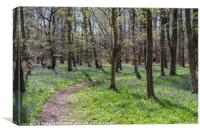 A stroll through the Bluebells at Pods Wood, Canvas Print