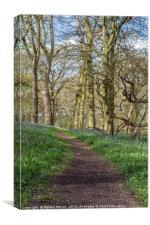 A wander through the Bluebells, Canvas Print