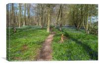 Bluebell woodland, Essex, Canvas Print