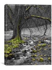 Tree by Stream, Canvas Print