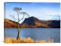Lake Tree, Canvas Print