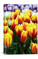 Red and Yellow Tulips, Canvas Print