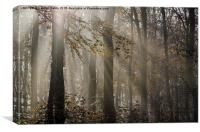 Sunlight Breaks Through the Fog in the Woods, Canvas Print