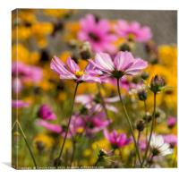 Summer Flowers, Canvas Print