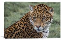 Portrait of a Jaguar, Canvas Print