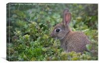 Rabbit, Canvas Print