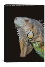 Close up of an iguana, Canvas Print