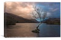 The lone tree, Canvas Print