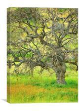 Wildflowers Under Oak Tree, Canvas Print