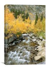 Autumn Colours and Rushing Stream - Eastern Sierra, Canvas Print