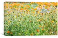 Nature's Artwork - California Wildflowers, Canvas Print