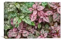 Colorful Leafy Ground Cover, Canvas Print