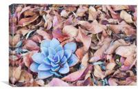 Fallen Autumn Leaves, Canvas Print