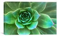 Succulent Closeup, Canvas Print