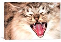 yawning cat, Canvas Print