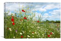 colourful wildflower meadow, Canvas Print