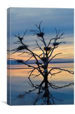 Salton Sea Cormorant Tree, Canvas Print