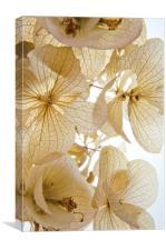 Paper Petals, Canvas Print