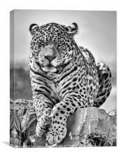 Jaguar, Canvas Print