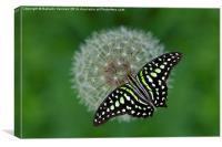 Green Butterfly, Canvas Print